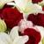 Hortensia's Flowers