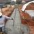 Veal Concrete Inc