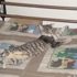 Memphis Humane Society