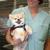 Bulger Veterinary Hosptial