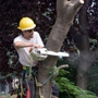 Hunt's Tree Removal And Pruning Service Inc