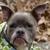 Furry Tail Endings Dog Groom