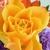 Essence Flowers