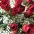 Skip's Florist