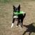 Ruff House Pet Services