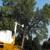 D&J Tree Service Inc