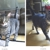 Parsippany-Troy Hills Township Municipal Departments-Animal Control