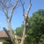 Timber Tree & Lawn Service LLC
