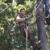 SCR  Tree Service