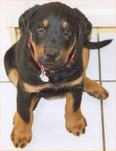 Miami Veterinary Clinic Paola Ks 66071 Yp Com