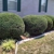 Southern Cuts Lawn Care and Maintenance
