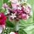 Snodgrass Floral