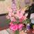 Wininger's Floral