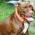 Diesel Dog Neckwear