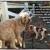 Snugglemeisters Pet-Sitting Pros, LLC