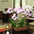 Lissy's Orchid Garden Inc