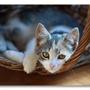 A Gentle Touch Pet Care Services Inc