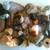 Earth Shan Treasures & Healing