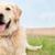 Animal Inn Pet Resort & Spa