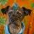 Posh Paws Pet Spa