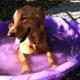 The Soapy Dog LLC