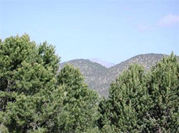 Best Western Pine Springs Inn, Ruidoso Downs NM