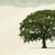 D Ryan Tree & Landscape