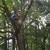 Waldrop Tree