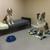 Four Paws Pet Hotel & Resort