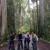 Redwood Rides