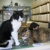 College Pet Clinic