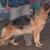 Crystal's Dog Training N Boarding