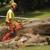 Chop Chop Tree