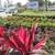 Olde Savannah Garden