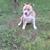 Brockton Blue Dog Shelter