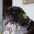 Forest Oaks Pet Grooming