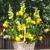 Raintree Florist