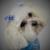 Cornerstone Pet Care