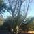 Capshaw Tree Service