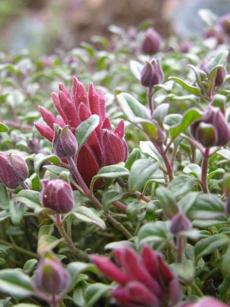 Theodore Payne California Native Plant Nursery & Wildflowers