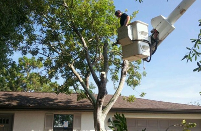 Lamb Tree Care - Sarasota, FL