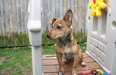 Best Friends Pet Care Windsor Nj