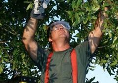 Dave's Tree Service Inc. - Daytona Beach, FL