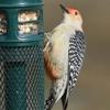 J J Cardinal's Wild Bird & Nature Store