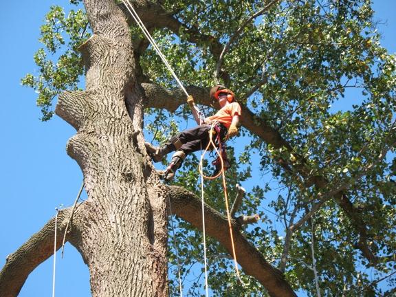 Troyer Tree Service - Sarasota, FL