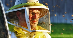 Bee Removal - Wildlife - Pest Control