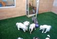 Pet Play House - Reno, NV
