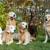 Hollywood Dog Training Center