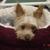 Hound Lounge Walnut Creek Professional Grooming & Dog Daycare