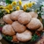 Silly-Yaks Bake Shop (Custom order bakery)